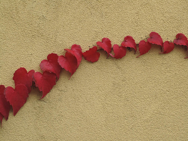 &amp;lt;3, cute, heart shaped, heart shaped leaves, love