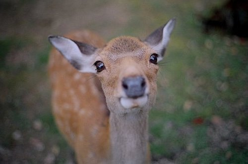 animal, bambi, deer, very cute