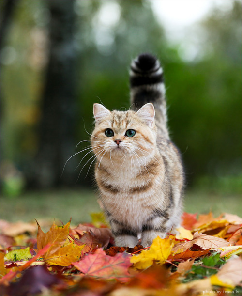autumn, cute, fall, kitten, leaves