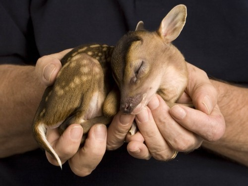 baby, bambi, cute, deer, hands