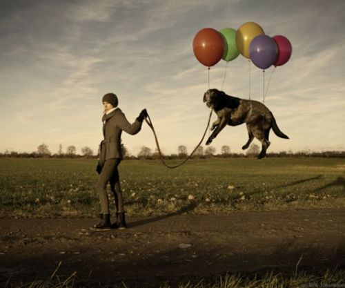 baloons, colors, dog, fall, flying