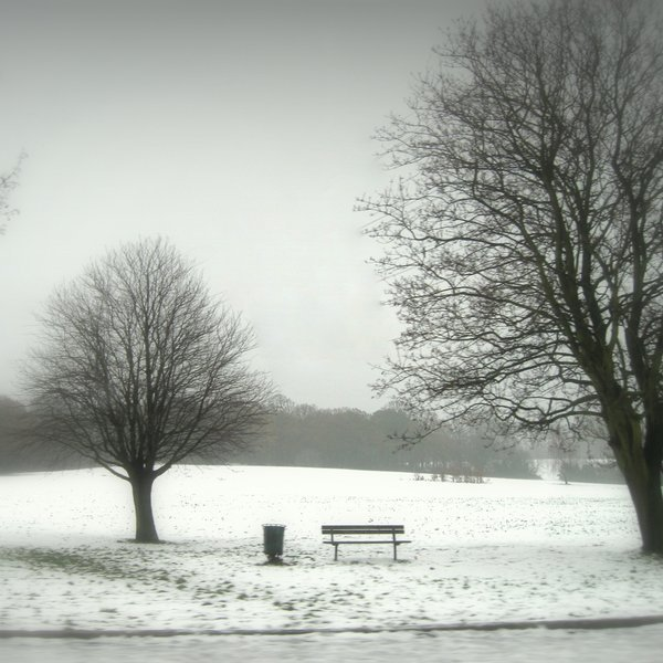 bench, nature, photo, photography, snow, tree, white