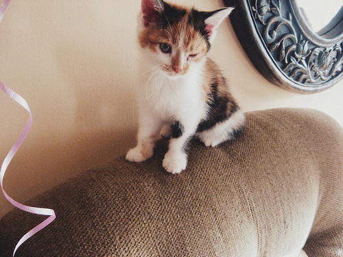 black, brown, cat, couch, cute, eye, gorgeous, house, kitten, pretty, room, small, white