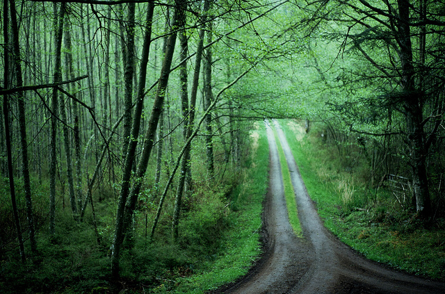 country, countryside, dirt road, forest, greenx
