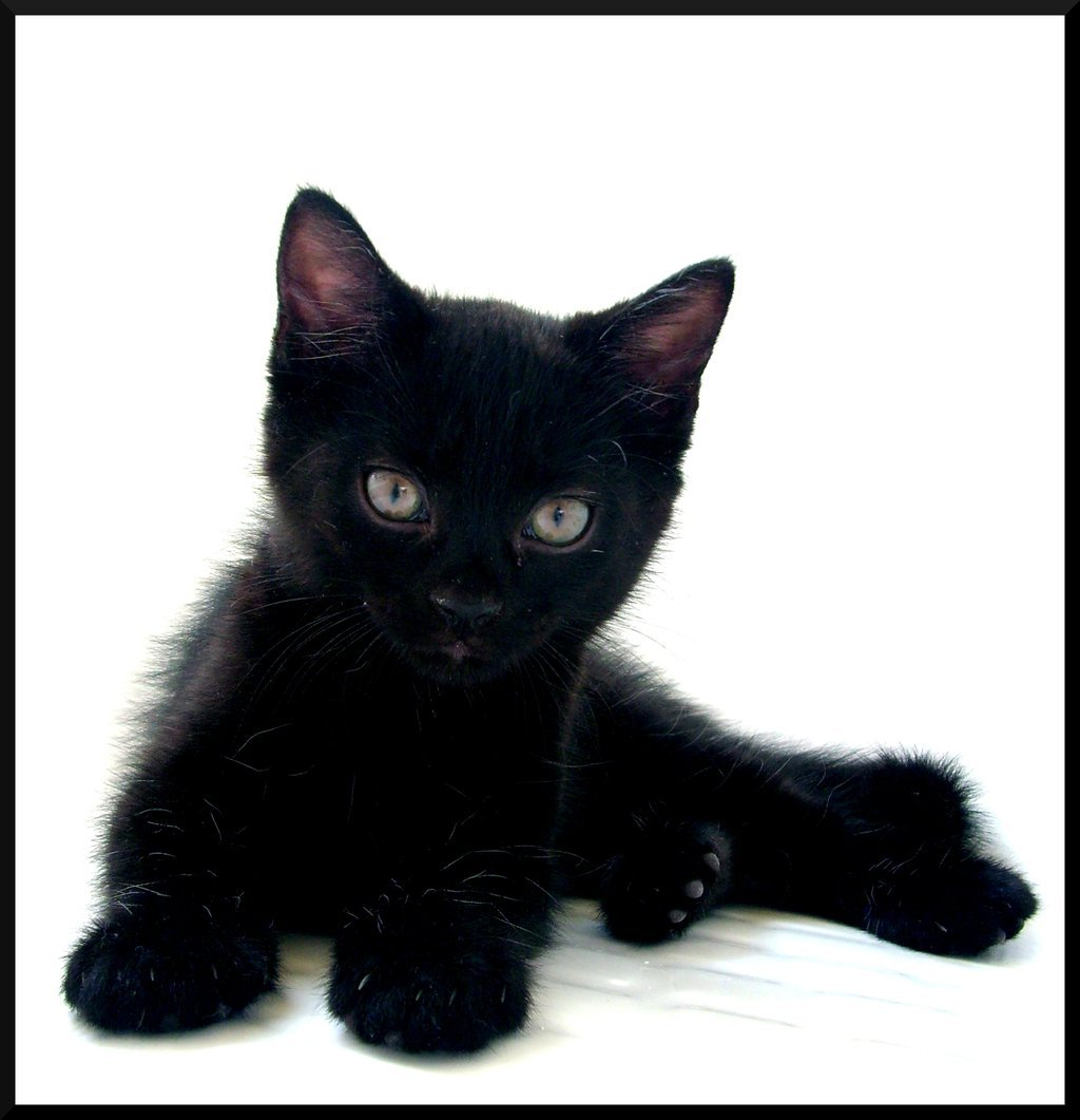 Cat Pictures Adorable-black-cat-cute-love-Favim.com-174637