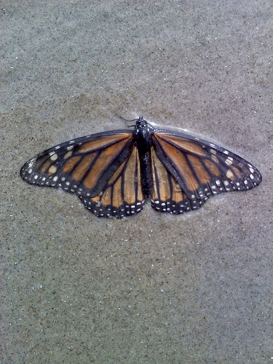 beauty, butterflies, freedom, peace, sand