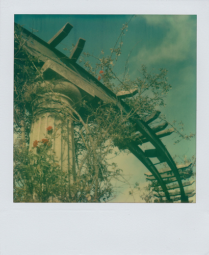colum, plants, polaroid, roses, tracks, train tracks