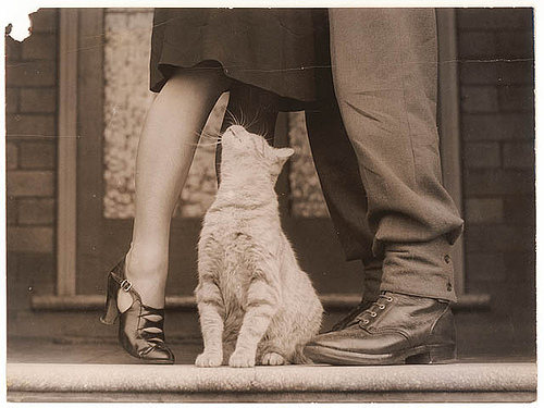 couple, kitty, vintage