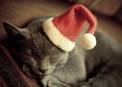adorable, cat, christmas, cute, kitten