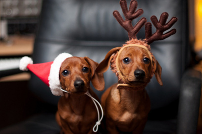 adorable, christmas, cute, dachshund, dogs, puppies, reindeer, santa hat