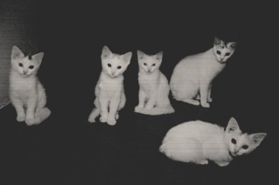 animals, black and white, cats, cute, kittens