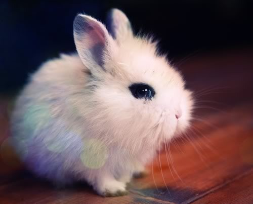 baby, bunny, cute, rabbit