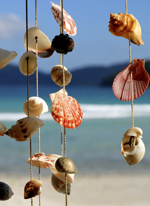 beach, photography, shells, summer