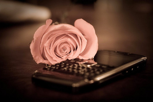 beautiful, black, blackberry, cute, fashion, flowers, inspiration, light, love, photo, photography, pink, pretty, rose, vintage
