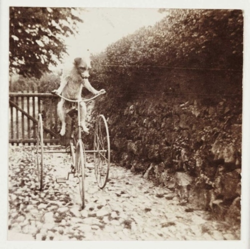 bicycle, bike, girl, old bike, vintage