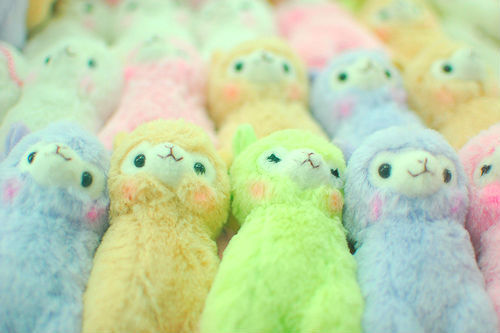 colorful, colors, cute, ovelhas, pastel colors, plush, plushes, rainbow colors