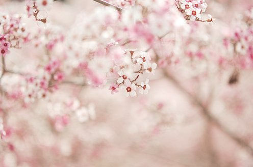 floral, flowers, photography, pink, pretty - image #176978 ...