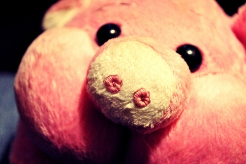 adorable, animal, bacon, cute, eyes, food, nose, pig, piggy, pink, stuffed
