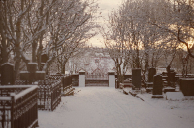 analog, cemetery, dark, dead, death, ice, nature, photography, sky, snow, white