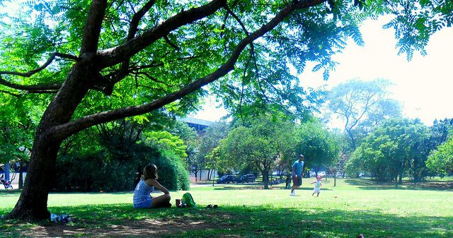 arvore, dog, green, ibirapuera, kids