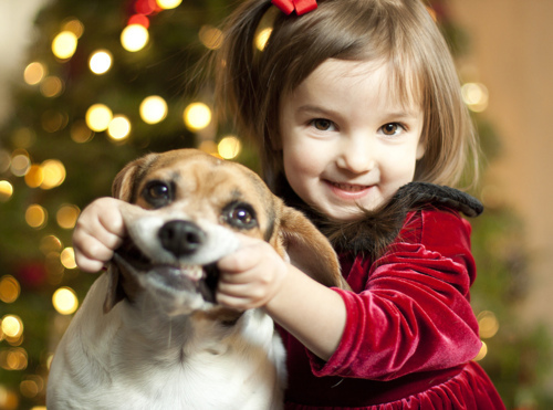 child, christmas, cute, dog, favor
