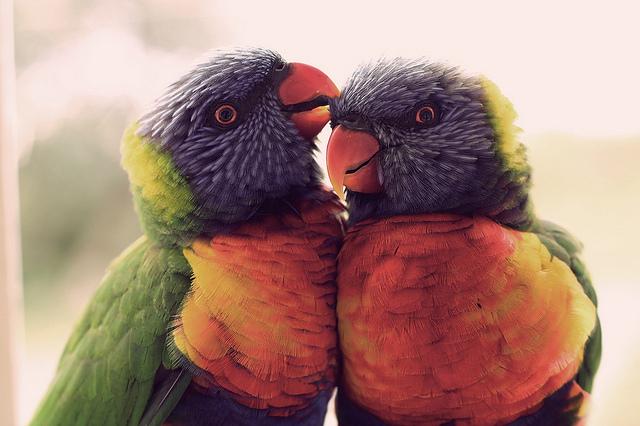 animals, colorful, cute and parrots
