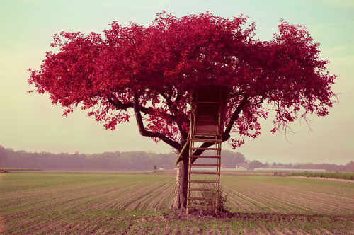 beautiful, blue, dream, green, nature, nice, pretty, red, sky, tree
