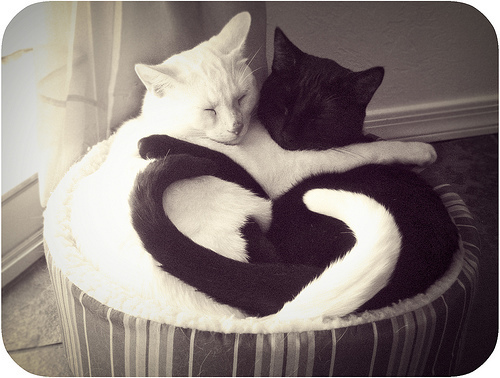 black and white, cats, cute, heart, hug