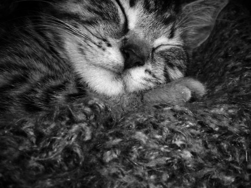 black&white, cat, cute, kitten, sleeping