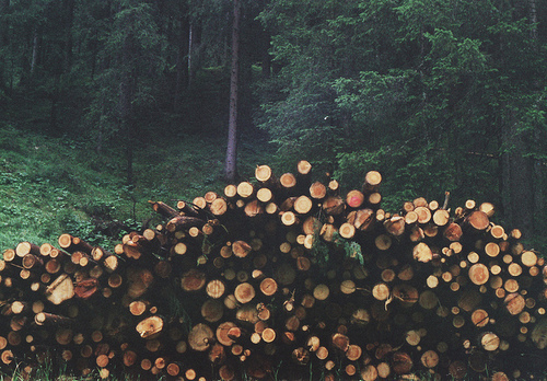 brown, forest, grass, green, logs