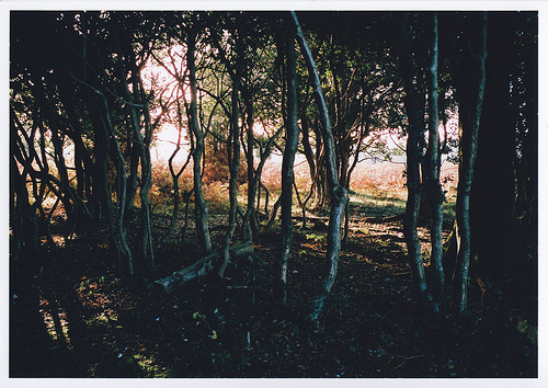 forest, nature, tree, trees, vintage