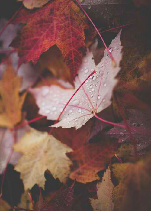 background, dew, fall, fall leaves, grunge, leaves, live, love, november, october, orange, raindrops, red, winter, yay