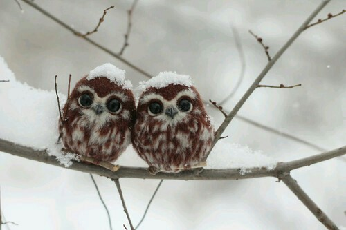 animales, babies, forest, new, owls, snow, winter, with, First Set on Favim.com, cobered