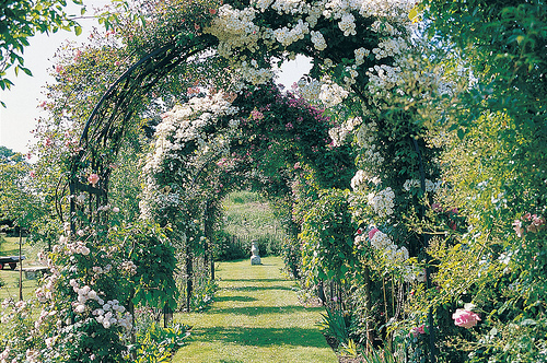 arch, flowers, garden, greenery, path, pretty, romantic, sunlight