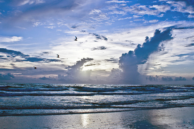 beach, birds, blue, clouds, sky