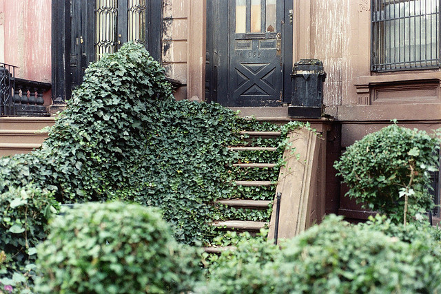 beautiful, brooklyn, ivy, overgrown, steps
