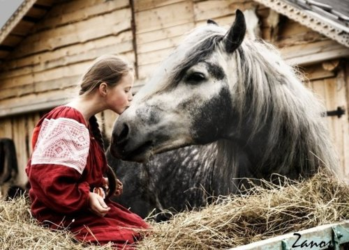 beautiful, cute, dress, equine, friends