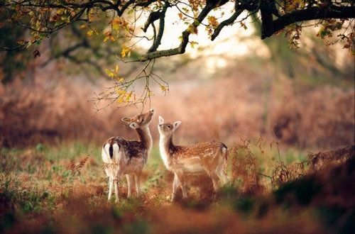 animal, beauty, deer, harmony, innocence, nature, tree