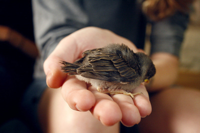 animal, bird, hand, life, little, small