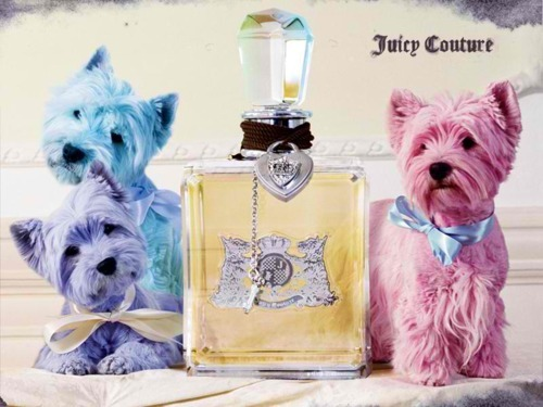 blue, colors, cute, dog, perfume
