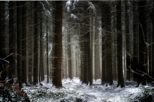 cold, forest, gsayour, photography, snow, trees, winter