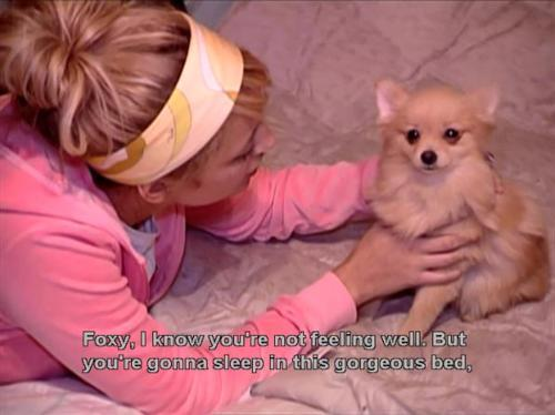 cute, dog, funny, nicole richie, quote, show, television, the simple life