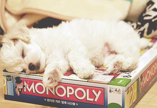 cute, dog, monopoly, puppy, sleep