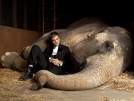 elephant, robert pattinson, water for elephants