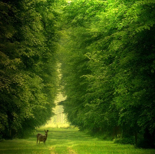 forest, green, nature