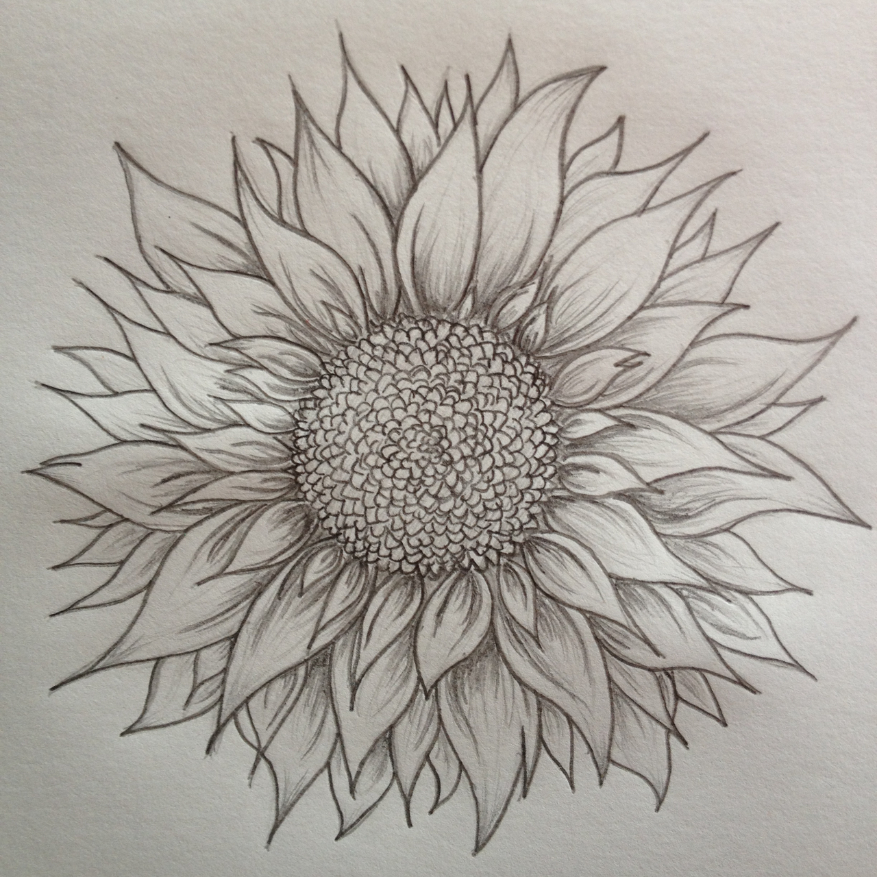 how to draw a realistic sunflower