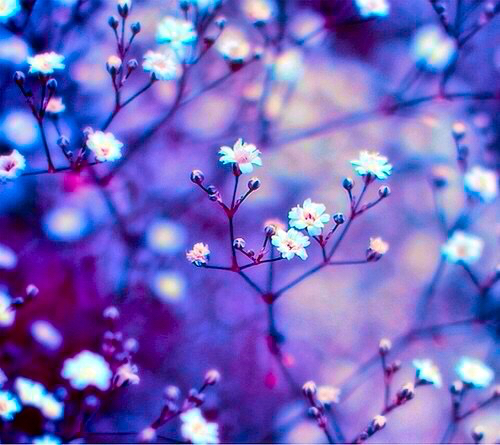 Image Gallery indie flower backgrounds