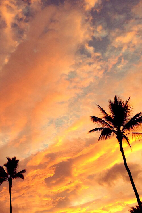 beach, palm, palm trees and summer