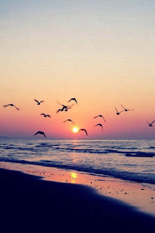 beach, birds, cali, california, colorful, colors, cute, dream, freedom, fun, good vibes, heart ...