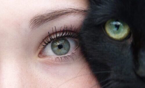 http://s1.favim.com/orig/150410/black-cat-dark-eye-Favim.com-2636860.jpg